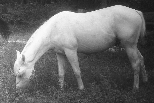 Horse Related B&W, late 1960s - early 1970s