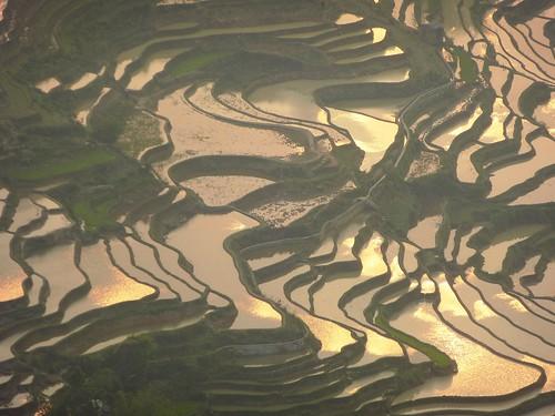 Yunnan13-Yuanyang 24-Bada (35)