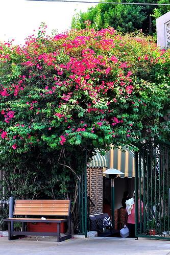 Raffis Place - Glendale