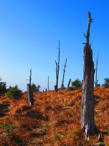 Dead Trees at the top of Jirisan