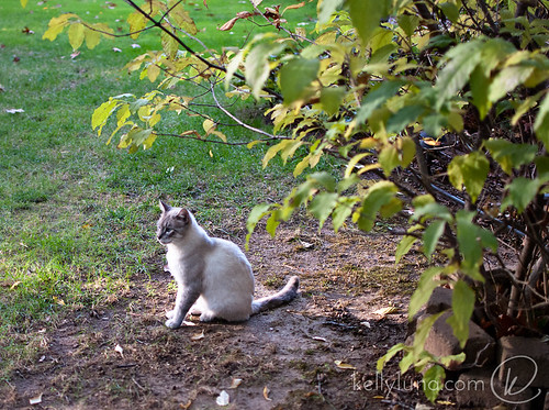 floyd-outside-under tree