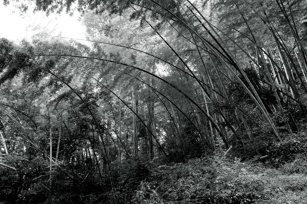 月山富田城跡|島根県安来市