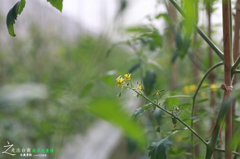 綠翠微農場 (20)