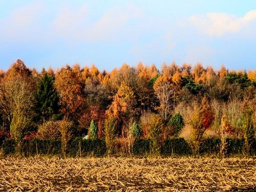 autumn forest herbst wald hdr barmstedt