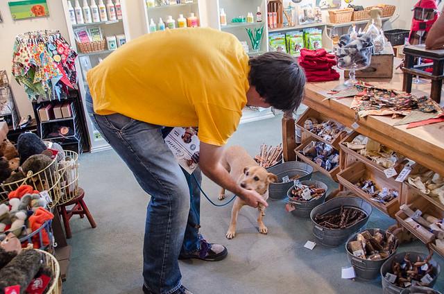 Diggity Dog - Dog Friendly Carmel