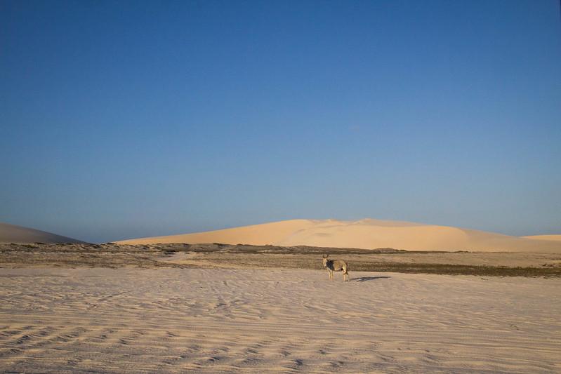 jericoacoara_dunes
