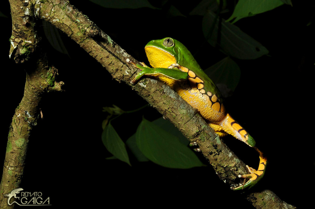 Renato Gaiga S Most Interesting Flickr Photos Picssr