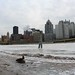 Small photo of Lone gesse duckling near frozen Allegheny River