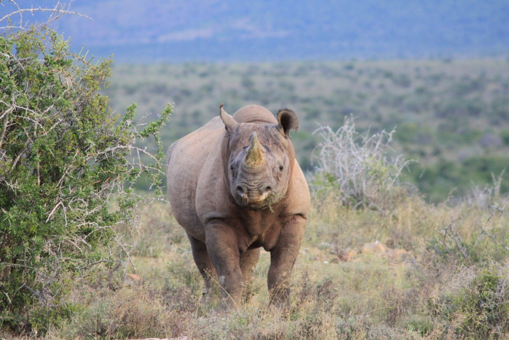 Addo Game Drive