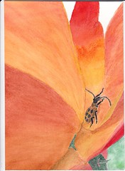 Spotted Cucumber Beetle on Rose - trimmed to 5x7
