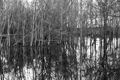 winter bw reflection water blackwhite texas unitedstates brush hdr lightroom 2014 flowersplants 3xp mineola photomatix tonemapped canonef24105mmf4lisusm 2ev bwhdr detailsenhancer camera:make=canon exif:make=canon geo:state=texas canoneos7d mineolanaturepreserve geo:lat=3263309 geo:countrys=unitedstates exif:lens=ef24105mmf4lisusm camera:model=canoneos7d exif:model=canoneos7d exif:aperture=ƒ16 exif:focallength=35mm mineolanaturepreserveonthesabineriver geo:city=mineola copyright©2014ianaberle exif:isospeed=100 kaylaspond geo:lon=95465971666667