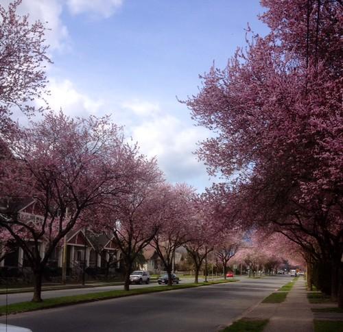 It's Spring in Chilliwack.