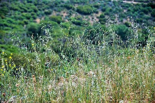 california nature grass digital photo spring afternoon portolahills whitingranchwildernesspark
