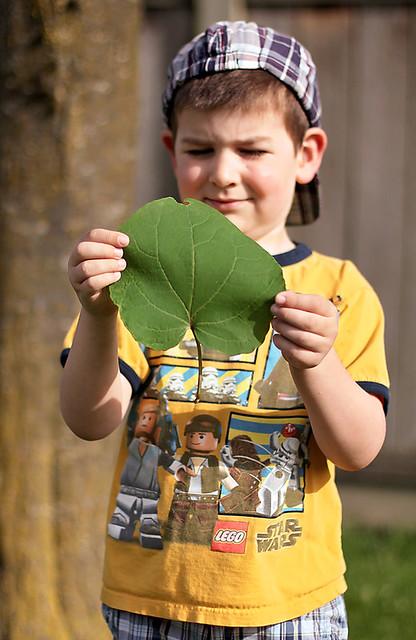 A Boy and His Leaf