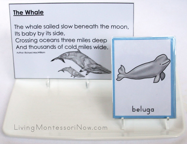 Whale Tray