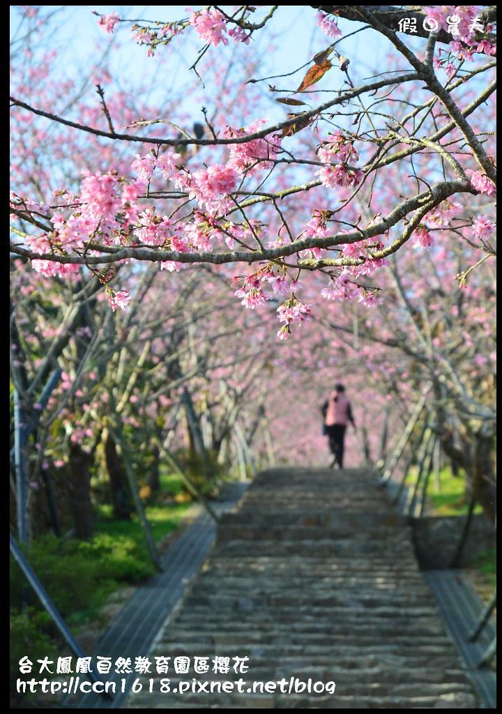 台大鳳凰自然教育園區櫻花DSC_5909