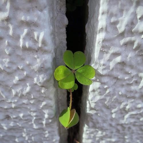 二個目の課題は「隙間」がテーマ。隙間から植物が生えてる様を100枚撮りました。