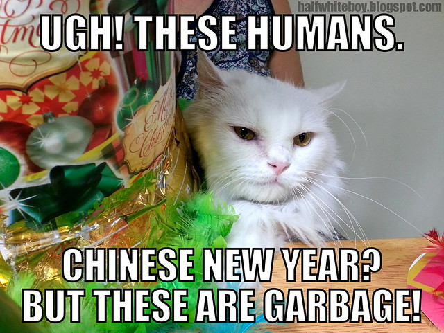 cats on chinese new year 02
