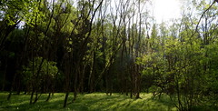 WeatherMaker posted a photo:	Just crossed the border for a short walk in this lovely little forest.