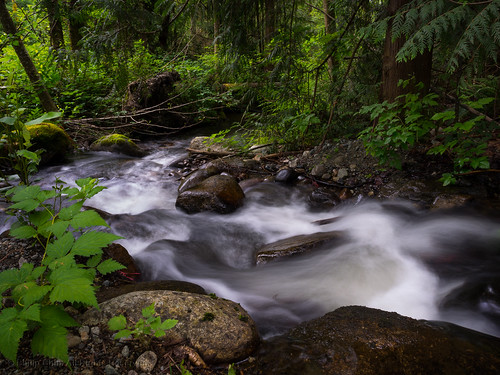creek britishcolumbia water stream rainforest canada forest coquitlam vancouver ca