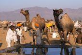 Indien, Trekking in Rajasthan. In der Wüste Thar. Foto: Archiv Härter.