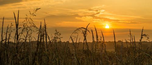 sun field grass sunrise golden village hampshire hour rise titchfield