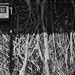 Tree Trunk Fusebox