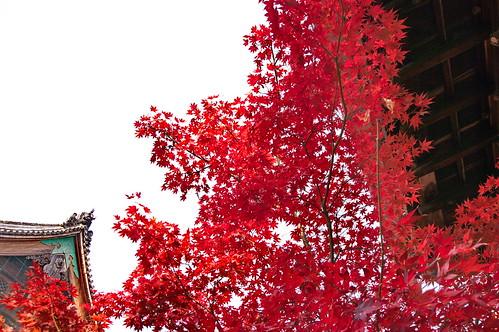 【写真】2012 紅葉 : 清凉寺/2020-09-21/IMGP7815