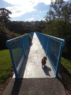 Alfie on Massey to West Harbour footbridge