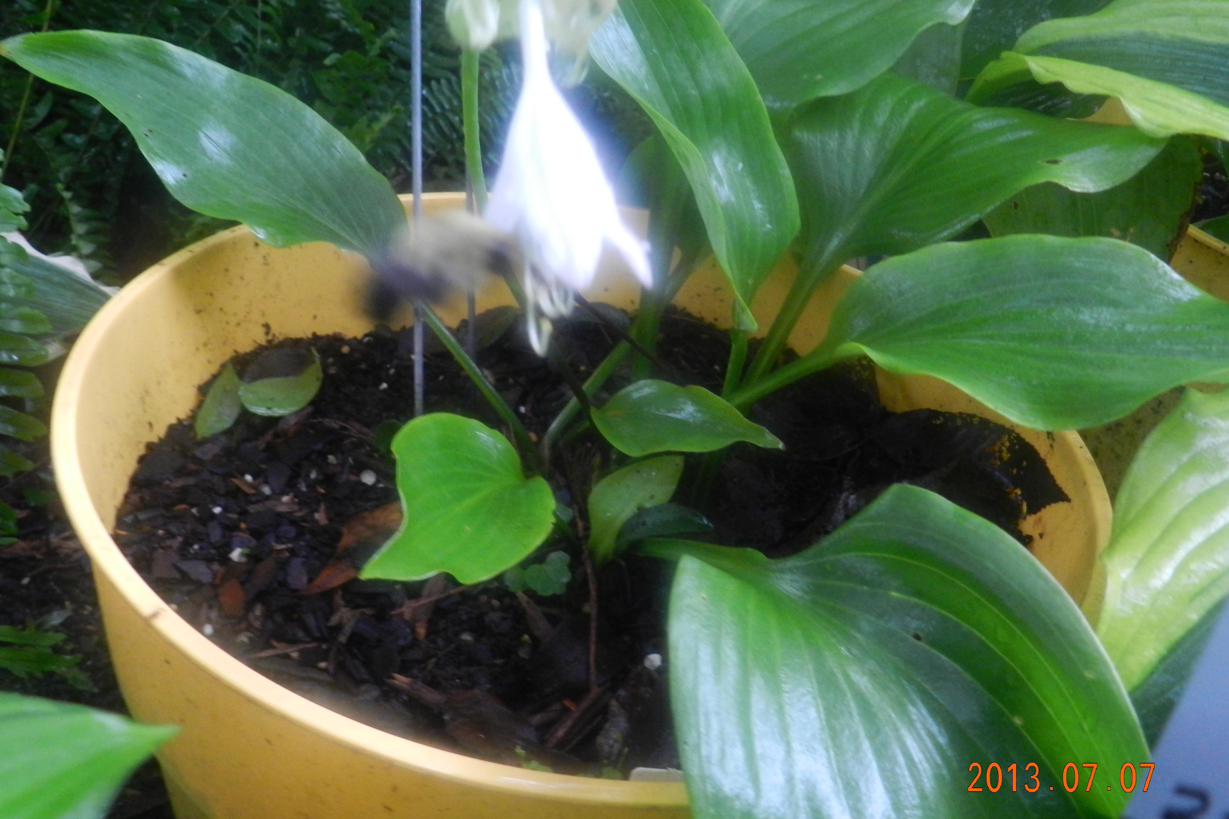 Garden13July0201