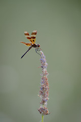 Halloween Pennant-47578.jpg by Mully410 * Images