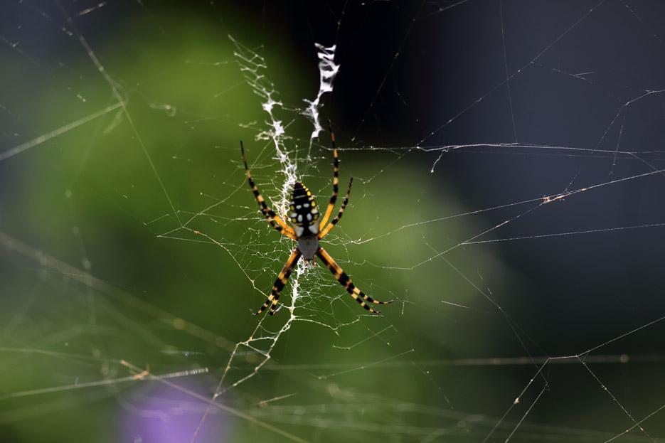 073113_bug_spider02