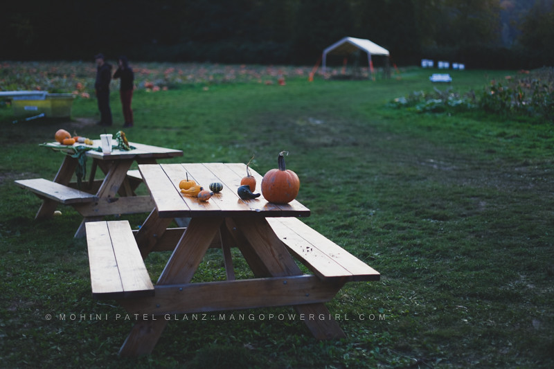 pumpkin patch picnic bench