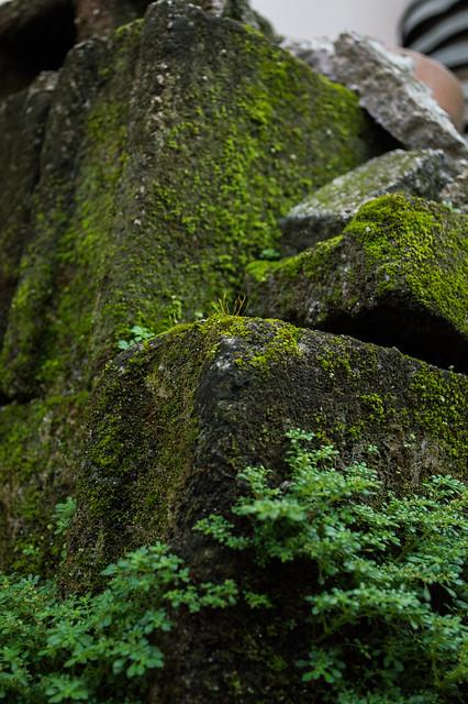 Low Angle Shot - Green Moss