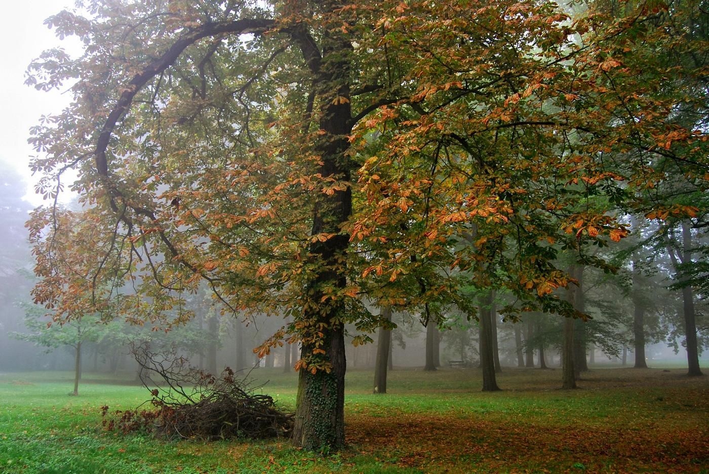 Herbst in Pirna