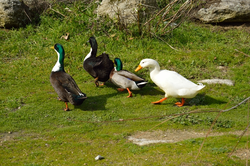 lara-vazquez-madlula-blog-ducks-park
