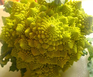Living Demonstration Of The Fractal Nature Of Biological Growth Patterns