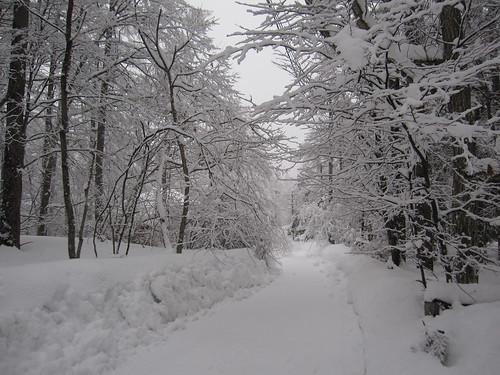 夕方やっと雪が止みました by Poran111