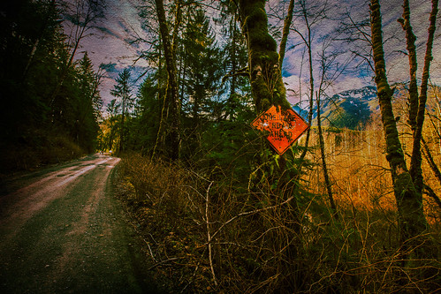 road trees texture sign moss kingcounty jerryjones middleforksnoqualmieriver middleforkroad middleforkvalley