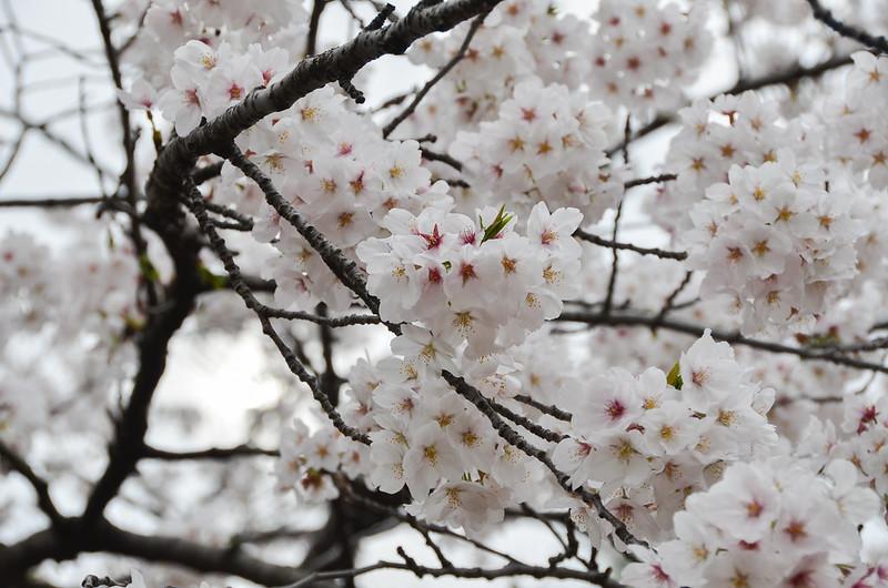 04.03.2014_kandagawa-55