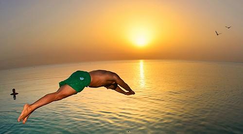 uk sea summer sky people lebanon usa sun bird water birds swimming swim sunrise cool iran seagull dive sunny calm summertime kuwait q8
