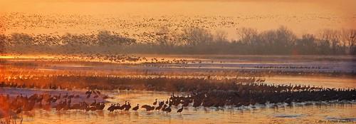 cold texture sunrise nebraska cranes migration sandhillcranes auduboncenter spectacle platteriver magicuniverse magicunicornverybest