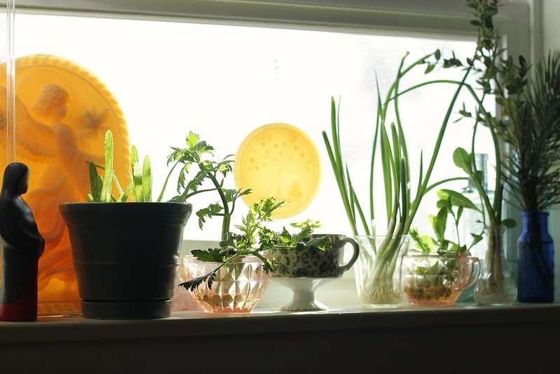 kitchen window garden is taking over!