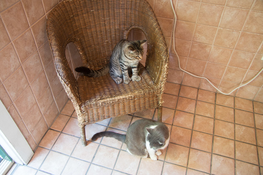 Cats in Hemingway House Bathroom