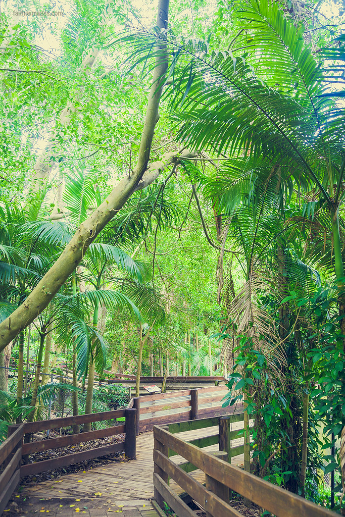 green jungle lush and pathway