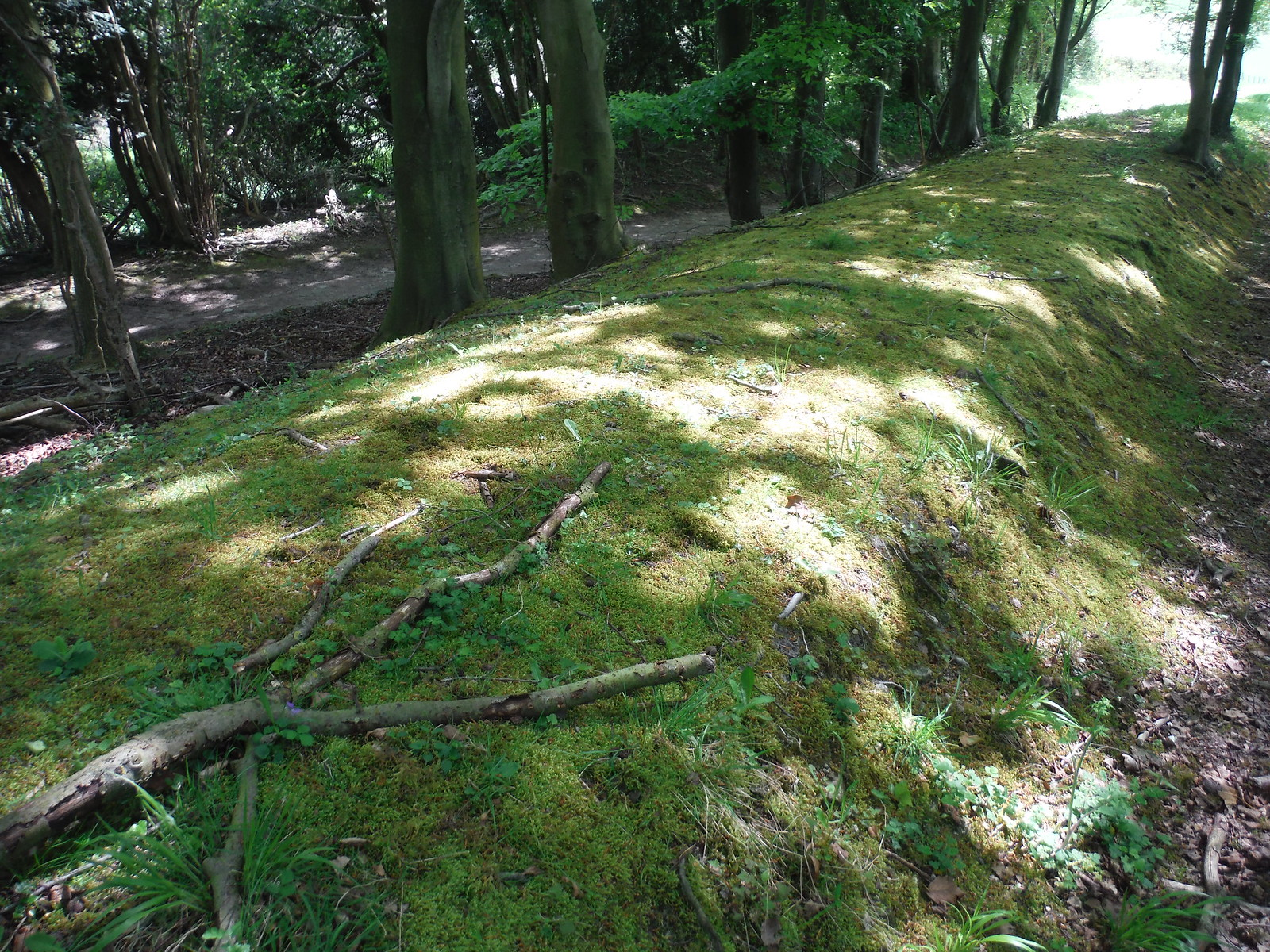 Mossy Bank near Chalky Path SWC Walk Rowlands Castle Circular - Extension