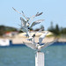 greater crested tern by kampang