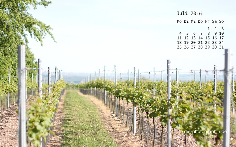 weinberge_juli_kalender_die-photographin