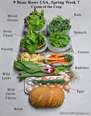 Spring CSA,  week 7,  Cream of the Crop  . . .  la…