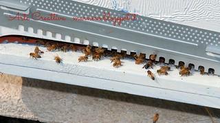 apicoltura vietti 1